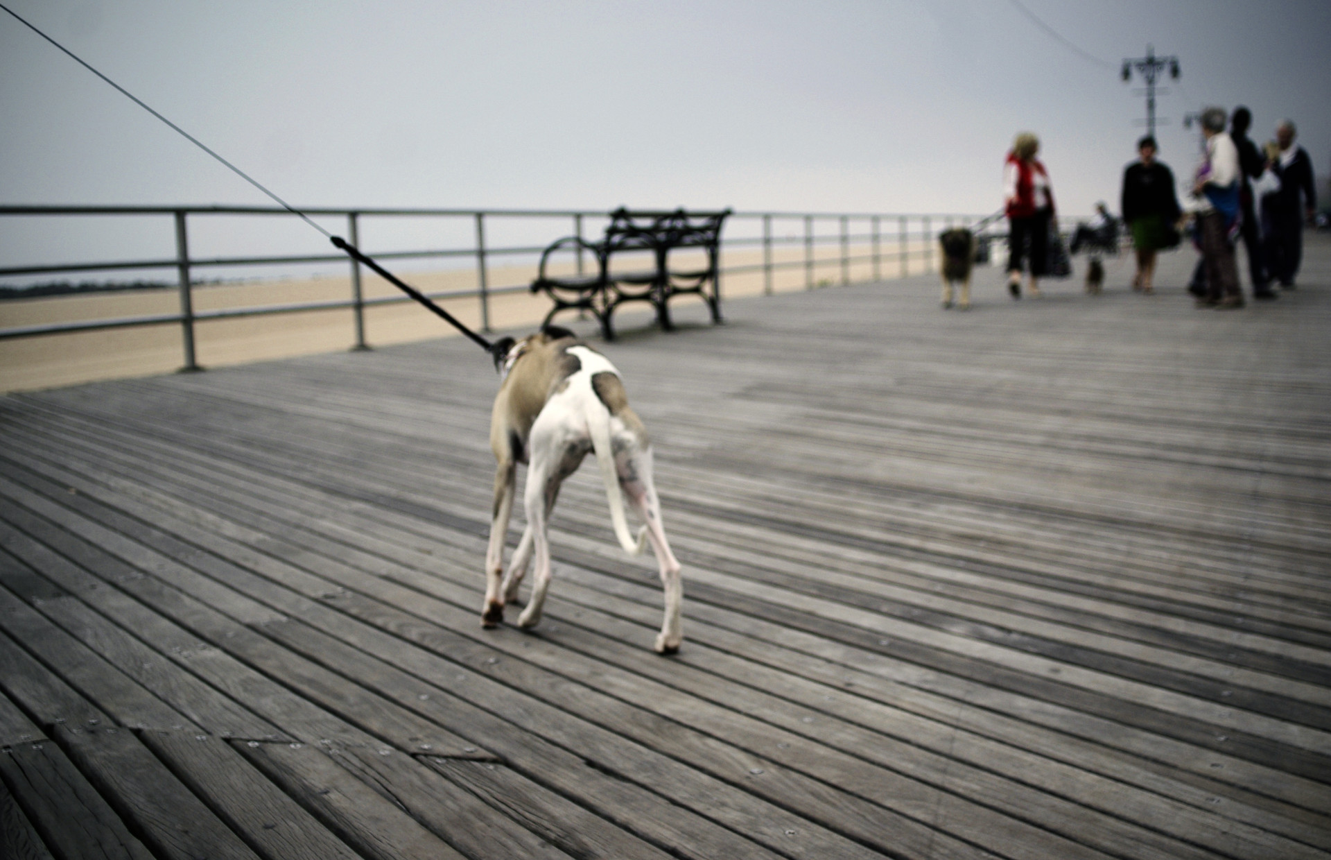 Dog-on-leach-Brighton-Beach-Coney-Island-New-York_IGP8272b