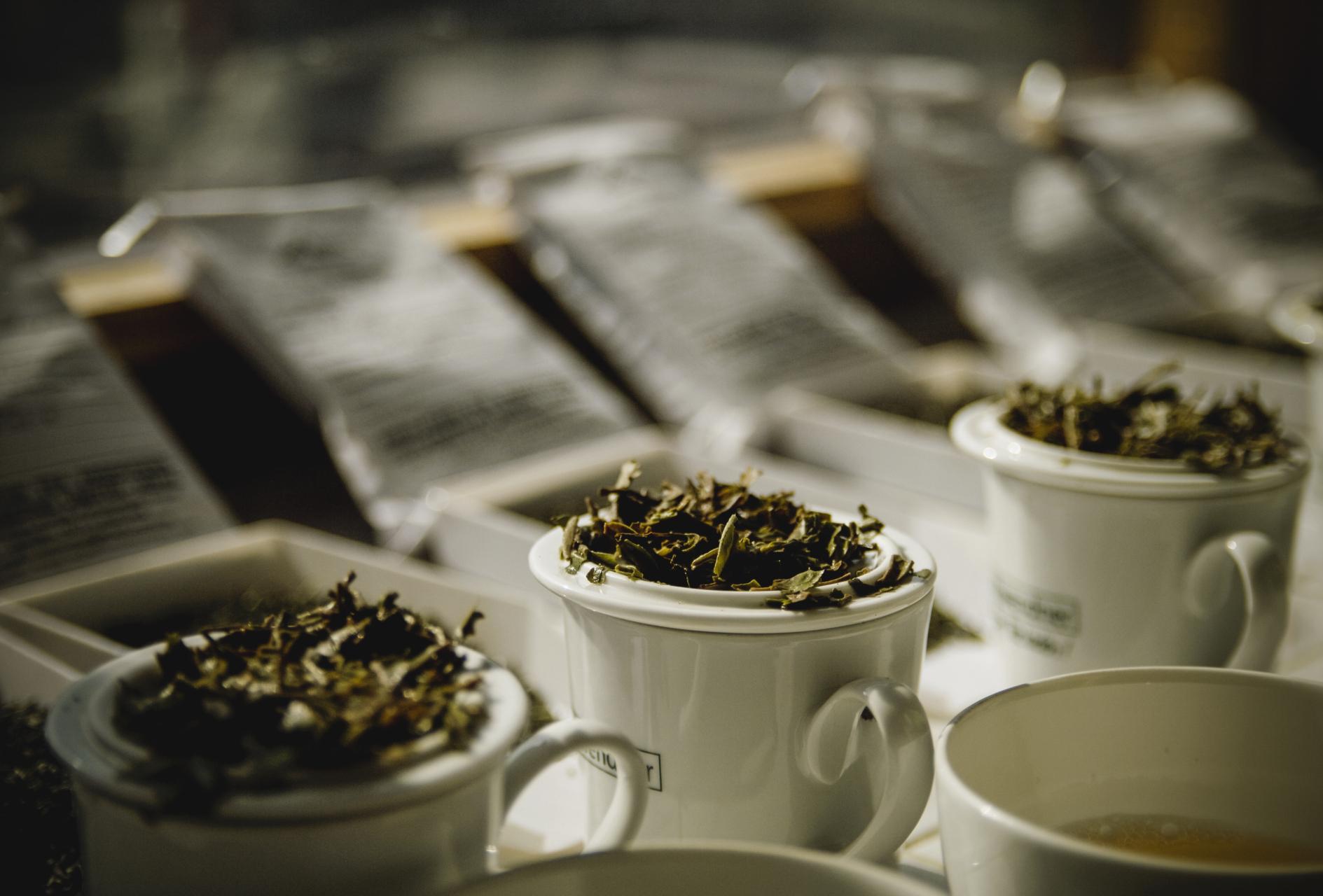 Tea tasting in Ilam (Nepal)