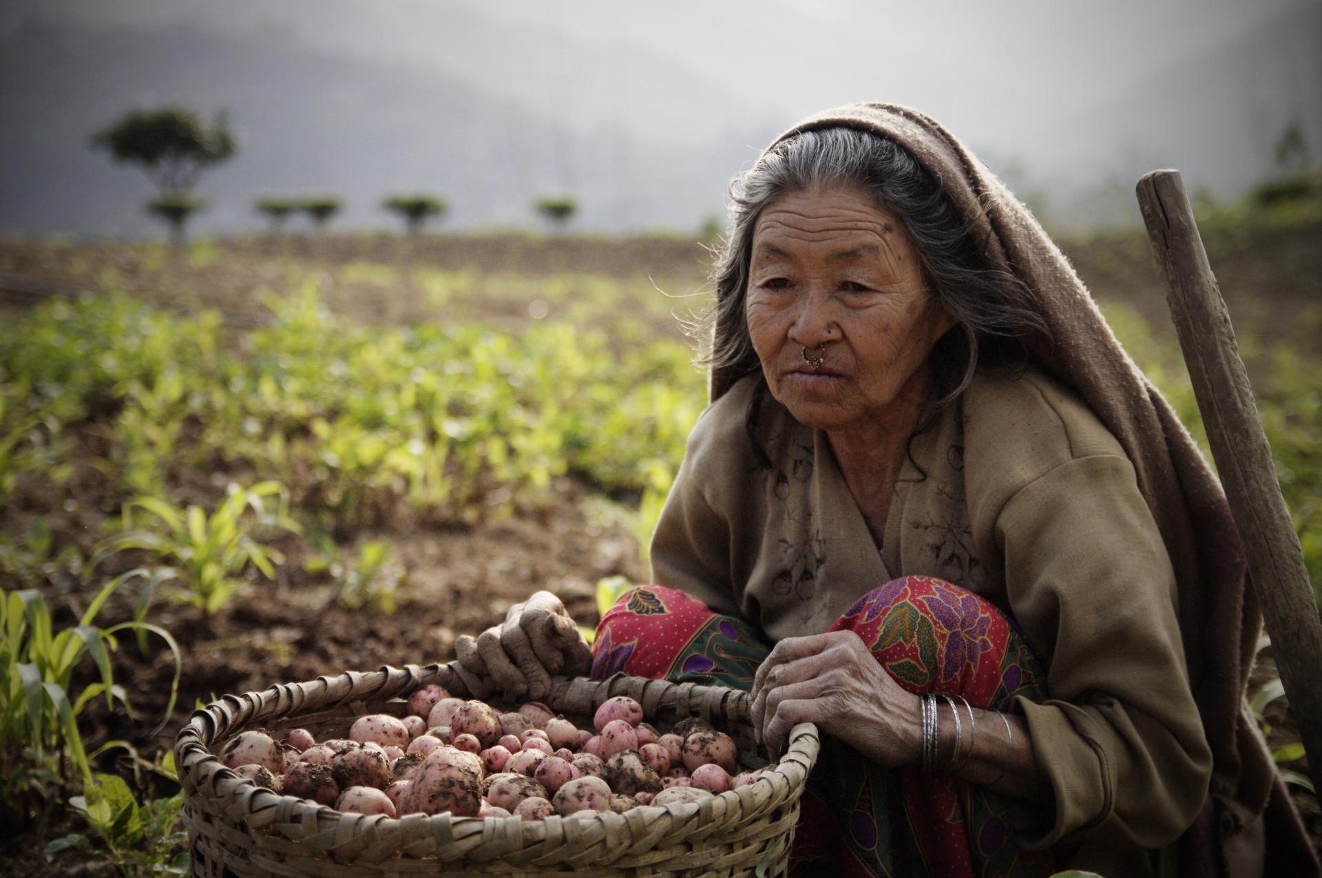Ilam (Nepal)