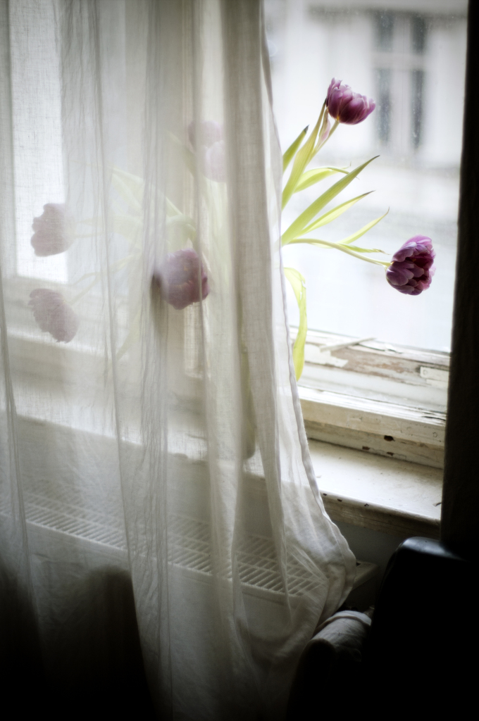 Flowers, Tulips, Berlin, Curtain, Window, Carolin Weinkopf, Photography