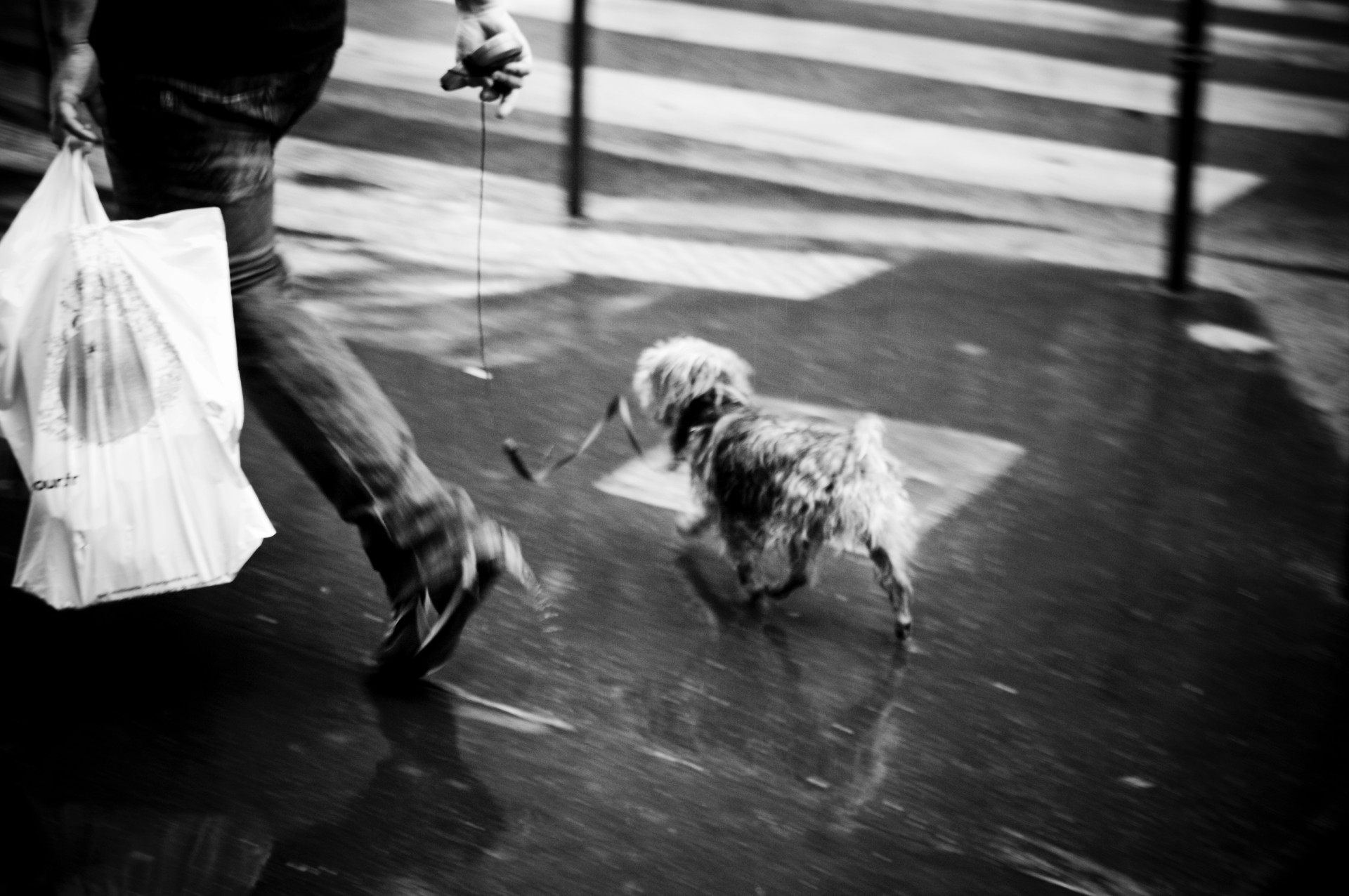 Paris_Dog_Carolin-Weinkopf_IGP1342sw