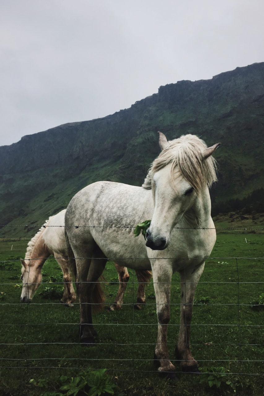 Iceland_Island_0002_Carolin-Weinkopf