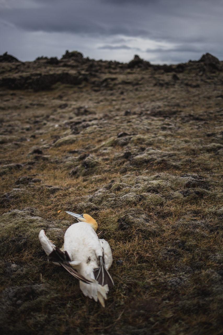 Island_Iceland_IMG_1021_Carolin-Weinkopf