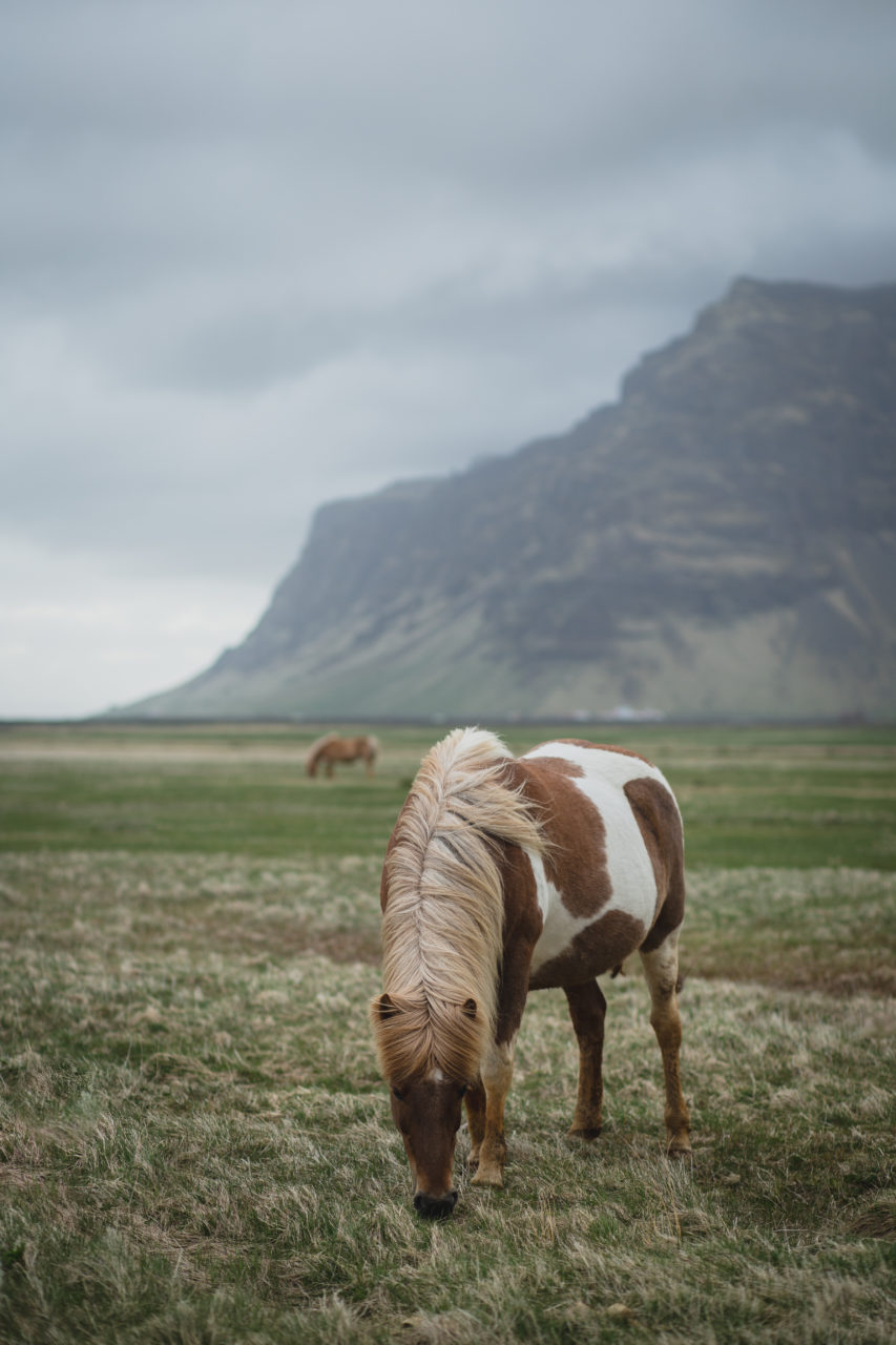 Island_Iceland_IMG_1549_Carolin-Weinkopf