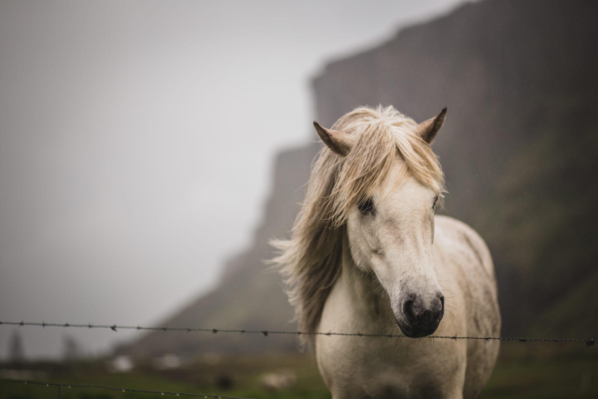 Island_Iceland_IMG_2030-2_Carolin-Weinkopf