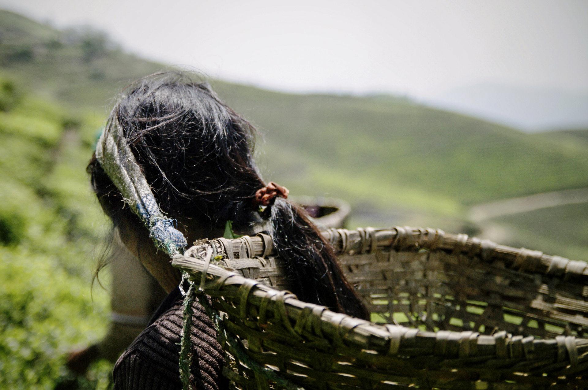 GIZ_Nepal_Organic-Tea_IGP6597b_Carolin-Weinkopf